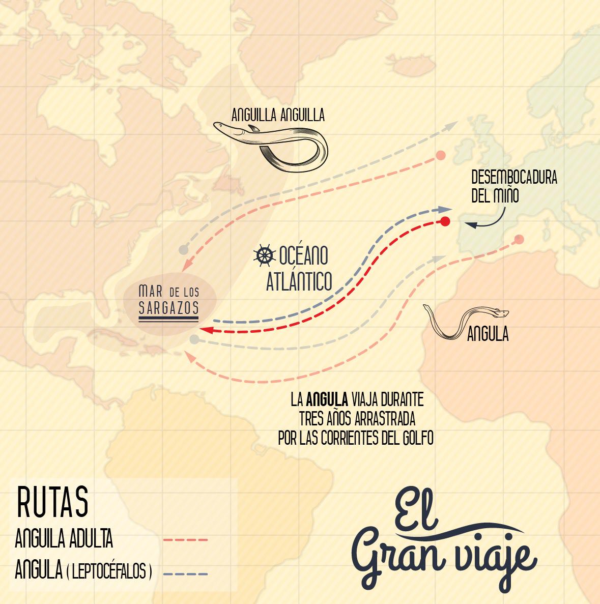 infografia mapa-ruta migratoria angulas-rio mino-01